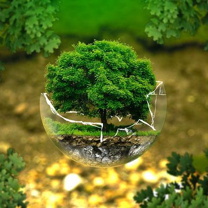Como probar un delito ambiental